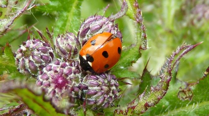 Inside a Ladybird